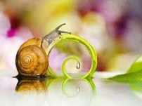 Spiral Escargot