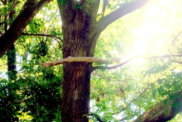 Tree-ception