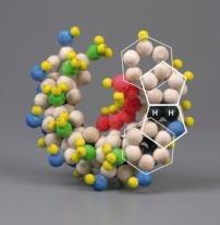 DNA structure 3-D