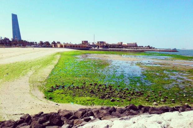 Sharq Kuwait Beach Algal bloom